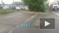 Видео: на Ворошилова из-за сильного ветра на тротуар ...
