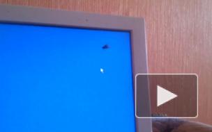 Троллинг мухи :)