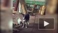 Зоозащитники обнаружили живодерню на Челябинской улице
