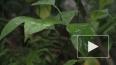Витамин С килограммами. В ботаническом саду  рекордный ...