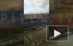"""Очевидец убийства собаки в """"Пулково"""" поделился подробностями происшествия"""