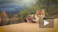 Видео с походными кошками умиляет миллионы пользователей ...