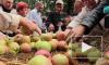 Яблочный Спас 2015 года: приметы, обычаи и традиции праздника дарят верующим надежду на лучшую жизнь