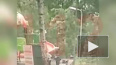 Опубликовано видео момента падения дерева в Москве, ...