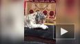 Братья Запашные показали на видео обед львов и тигров ...
