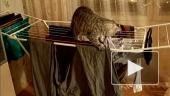 Кот-воришка и его падение