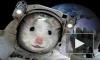 Космонавты-улитки успешно приземлились под Оренбургом