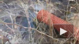 Экоактивисты нашли в Янино-1 сток, загрязняющий окружающую ...