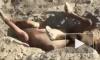 В Казахстане мужчины спасли жеребенка, которого задавило камнями