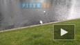 Видео: в Летний сад из зоопарка вернулись лебеди Руслан ...