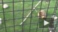 Весны может и не случиться: в Ленинградском зоопарке ...