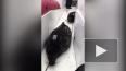 Под Петербургом рыбаки спасли двух тюленей, застрявших ...