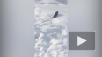 В Новом Девяткино мусорная свалка у озера привлекла крыс