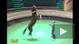 Президент Туркмении выступил в цирке на коне