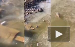 """У ЖД станции """"Яхтенная"""" заметили крыс, уток и голубей"""