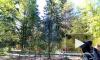 В Петербурге 27 июля обойдется без дождей, будет солнечно и жарко