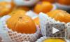 Россельхознадзор временно запретил ввоз цитрусовых из Китая