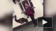Задиристое видео из Англии: двое британцев поругались ...