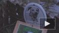 Кладбище домашних животных угрожает здоровью горожан