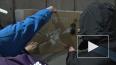 #Гнев228: в Петербурге борются с настенной рекламой ...