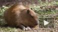 Атаку крыс остановили в центре в Петербурга
