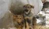 Правительство обяжет открыть подвалы для бездомных животных
