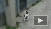 Пес вертикального взлета