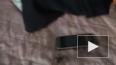 В Мордовии запечатлели на видео паука-волка