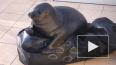 Петербургские волонтеры показали новую игрушку тюленя ...