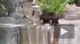 Пьяный мужчина напал на медведя в зоопарке и попал ...
