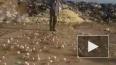 """Видео: в Грузии на свалке из """"испорченных"""" яиц вылупились ..."""