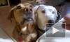 Собаки понимают язык людей намного лучше, чем мы думали