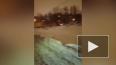 Свора бездомных собак нападает на людей на Ручьёвской ...