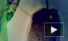 «Водоканал» : вода в домах петербуржцев пахнет ладожской тиной