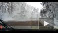 За секунду до: в Воронеже рухнуло огромное дерево ...