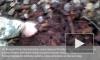 Рабочие раскопали целые арсенал боеприпасов на Царскосельских холмах
