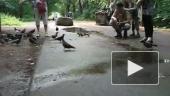 Белки в лесопарке