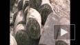 На Свердловской набережной исчезли... газоны