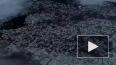 Тысячи мертвых мальков заметили в пруду Воронцовского ...
