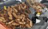"""""""З - запасливость"""": В США белки набили капот авто шишками"""
