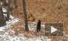 Тигр Амур и козел Тимур могут навсегда расстаться из-за женщины