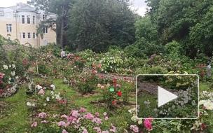Видео: Ботанический сад снова принимает посетителей