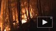 Росгидромет спрогнозировал ухудшение ситуации с лесными ...
