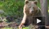 Россияне считают медведя самым удачным символом России