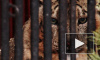 Хищников Ленинградского зоопарка кормят животными из Красной книги