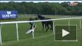 Видео: журналистка смогла остановить коня на скаку ...