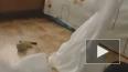«Писк» моды на Хэллоуин в Петербурге – полосатая тюремна...