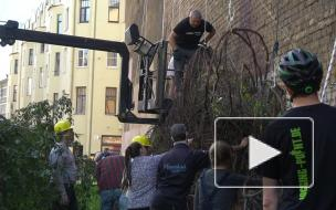 Зеленую стену из винограда на улице Лизы Чайкиной начали восстанавливать местные жители