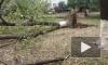 Появились фото и видео последствий урагана, который повалил в Петербурге 50 деревьев