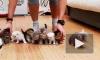 """""""Миссия невыполнима"""": Мужчина пытается усадить 10 котят для съемки"""